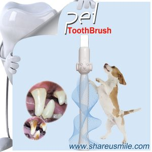 Most Effective Toothbrush for Dogs from Shareusmile