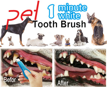 pet-tooth-brush-china toothbrush kit manufacturers-