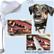 pet's-dental-care–Advanced-Cleaning-Dental-Chews-for-Small-Dogs