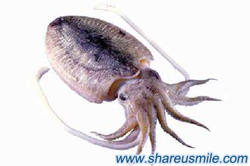 cuttlefish-bone--cleaning-way-for--removing-teeth-tartar-from-shareusmile-news