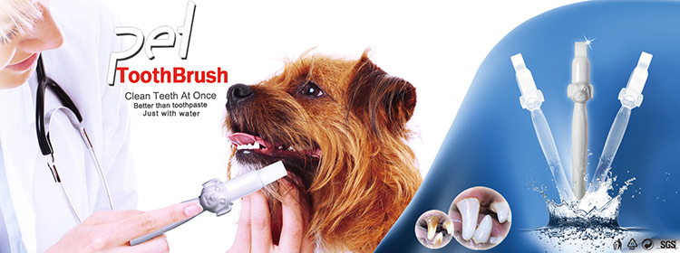 take care of your pet tooth by Pet toothbrush from shareusmile clean your dog teeth stains just water