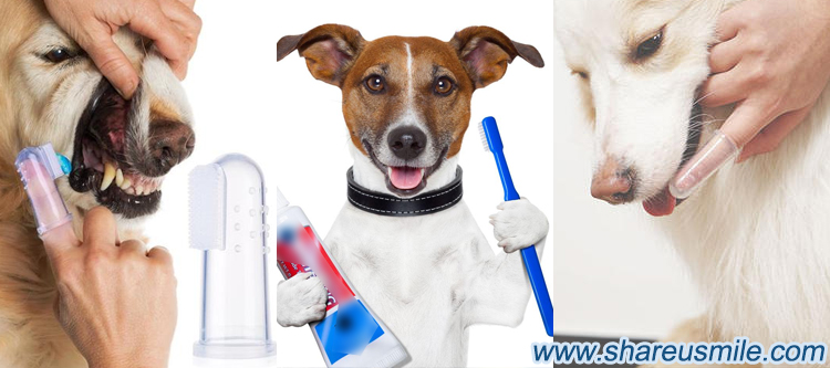 Finger-Toothbrush-is-Cleaning-your-pet-teeth-with-physical-friction-from-shareusmile-news