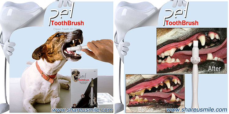 At-home-pet-teeth-cleaning-kit-shareusmile-dental-care-toothbrushes